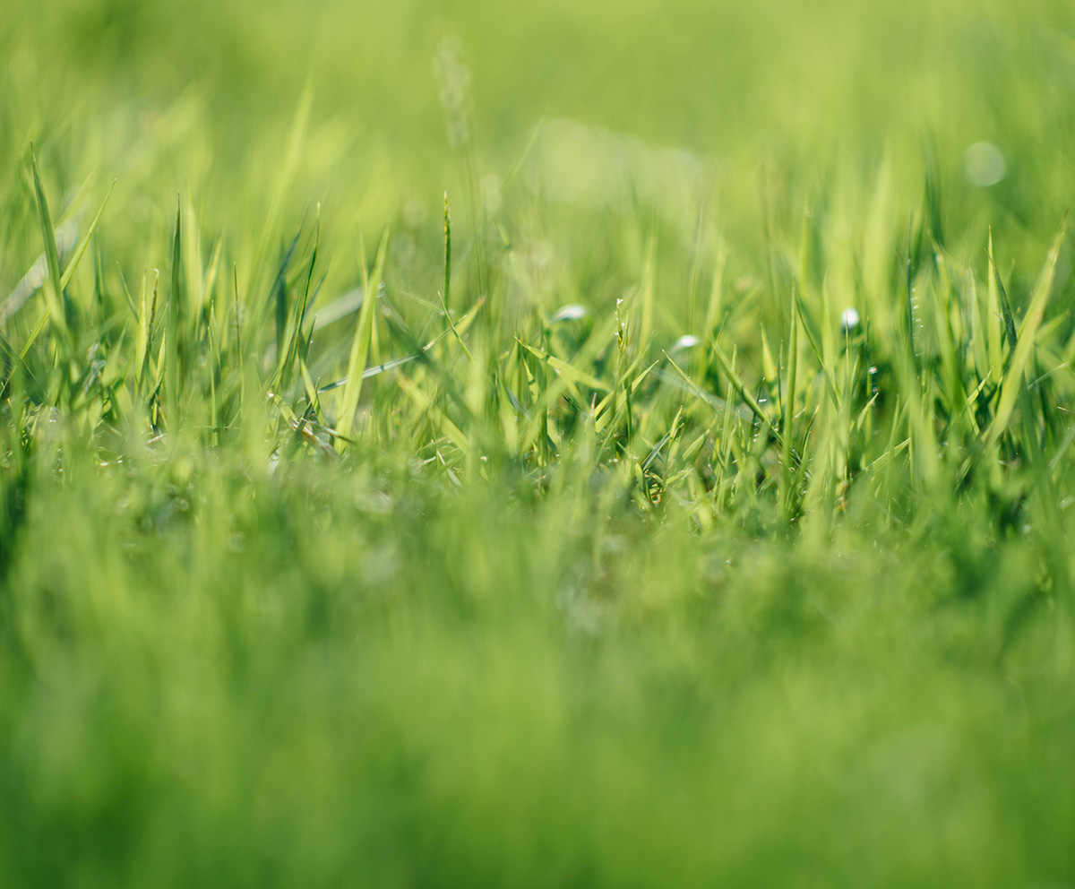 Water-wise Lawns: Lawns of the Future
