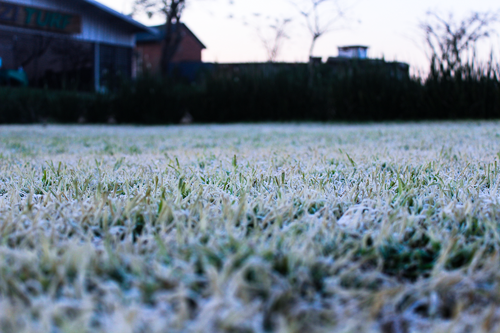 Frost Damage? Get your lawn fully recovered in no time.